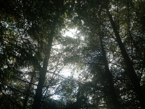 20121010-172244.jpg